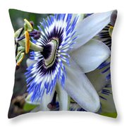 Intricate Passion Throw Pillow