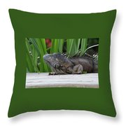 Iquana Throw Pillow