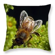 Iridescent Wings Throw Pillow