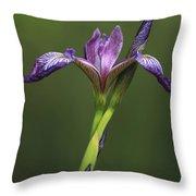 Iris At The Manor Throw Pillow