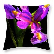 Iris Bloom Two Throw Pillow
