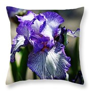 Iris Dressed For Royalty Throw Pillow