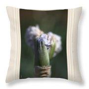 Iris Flower Starts To Reveal And Design Throw Pillow