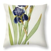 Iris Germanica Throw Pillow by Pierre Joseph Redoute