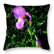 Iris In Sunshine Throw Pillow
