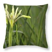 Iris Palaestina Throw Pillow