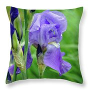 Iris Throw Pillow