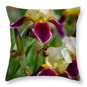 Iris Spring Throw Pillow