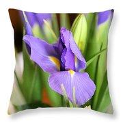 Iris Unfolding II Throw Pillow