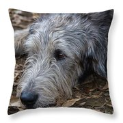 Irish Wolfhound Ivan Throw Pillow