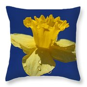 Irresistible Attraction Throw Pillow