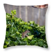 Is It Clear? Throw Pillow