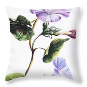 Isabella Sinclair - Pohue Throw Pillow