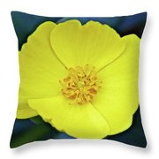 Island Bush Poppy In Rancho Santa Ana Botanic Garden In Claremont-california  Throw Pillow