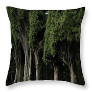 Italian Cypress Trees Line A Road Throw Pillow