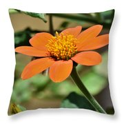 Ithonia Rotundifolia Throw Pillow