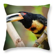 It's All About The Beak Throw Pillow