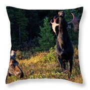 It's So Good To Be King Throw Pillow
