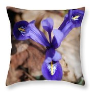 It's Spring 2010 Throw Pillow