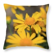 It's Your Day To Shine Throw Pillow