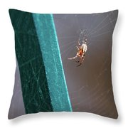 Itsy Bitsy 3 Throw Pillow