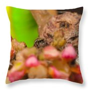 Itsy Bitsy Spider Over Mango  Tree Flowers Throw Pillow