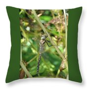 I've Got An Eye On You Throw Pillow