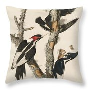 Ivory-billed Woodpecker Throw Pillow
