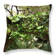 Ivy-covered Arch At The Alamo Throw Pillow