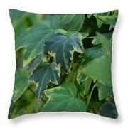 Ivy Greens Throw Pillow