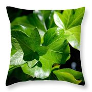 Ivy In Sunlight Throw Pillow