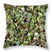Ivy Ivy Ivy Throw Pillow