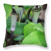Jack In The Pulpit Enhanced Throw Pillow