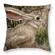 Jack Rabbit Portrait Throw Pillow