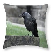 Jackdaw - Stare Throw Pillow