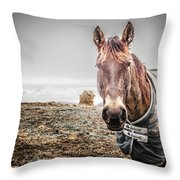 Jacketed Horse Throw Pillow