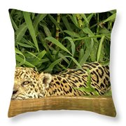 Jaguar Approaches Cayman Throw Pillow