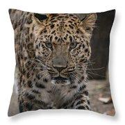 Jaguar On The Prowl Throw Pillow