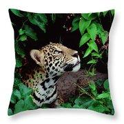 Jaguar Panthera Onca Peeking Throw Pillow