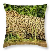Jaguar Prowls The River's Edge Throw Pillow