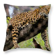 Jaguar Relaxation Throw Pillow