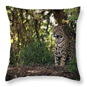 Jaguar Sitting In Trees In Dappled Sunlight Throw Pillow