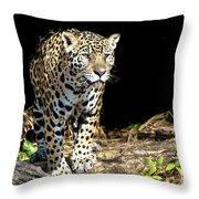 Jaguar Stare Throw Pillow