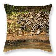 Jaguar Walking Beside River In Dappled Sunlight Throw Pillow