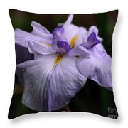 Japanese Iris In Bloom Throw Pillow