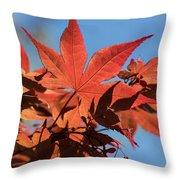 Japanese Maple In Sunlight Throw Pillow