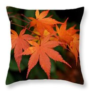Japanese Maple Leaves Throw Pillow by Patricia Strand
