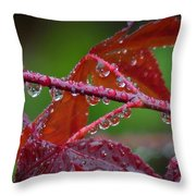 Japanese Maple On A Rainy Day Throw Pillow
