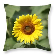 Jarrettsville Sunflowers - The Star Of The Show Throw Pillow