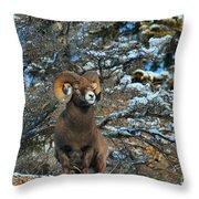 Jasper Alpha Male Throw Pillow